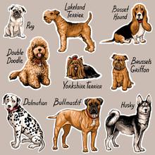 Set Of Dogs. Vector Illustrati...