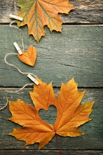 Dry Maple Leafs With Heart On ...
