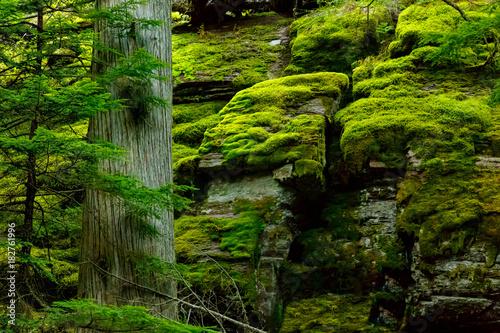Valokuva  Trail of the Cedars Glacier National Park in Montana