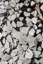 Broken Sand Dollars Clustered ...