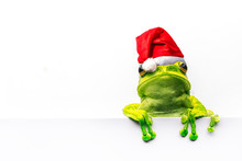 Frog With Christmas Hat Isolat...