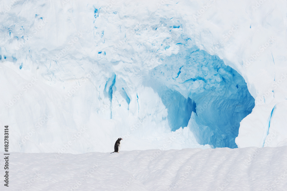 beautiful white icy hill with penguin in antarctic