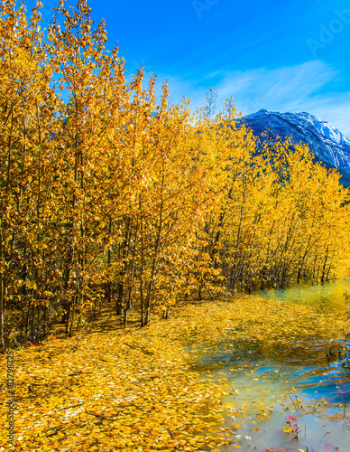Foto  Journey to the Golden Autumn