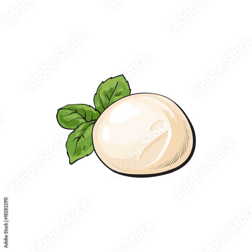 Fototapeta Round piece of Italian mozzarella cheese, sketch style vector illustration on white background. Realistic hand drawing of Italian mozzarella cheese decorated with basil leaves obraz