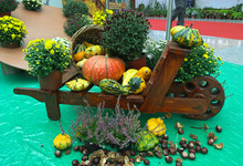 Autumn Decorations Made Out Of...