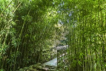 FototapetaBeautiful path through lush bamboo forest, Maui, Hawaii