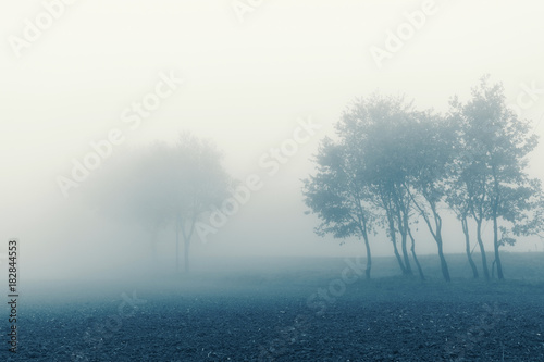Foto op Aluminium Groen blauw Natural landscape in autumn, trees and fields in the fog