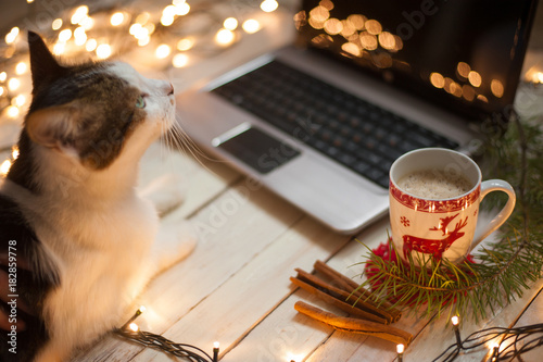 Foto op Canvas Kerstmis Freelancer's working place at home decorated for Christmas holiday. Cat sitting on the table.