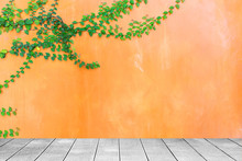 Wooden Board The Orange Wall Green Ivy Plant.