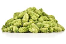 Heap Of Fresh Green Hops (Humu...