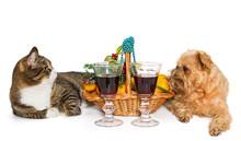 Cat, Dog And Christmas Basket