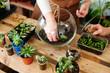 canvas print picture - Women's hobby. Girl nerd florist make a mini terrarium with house plants