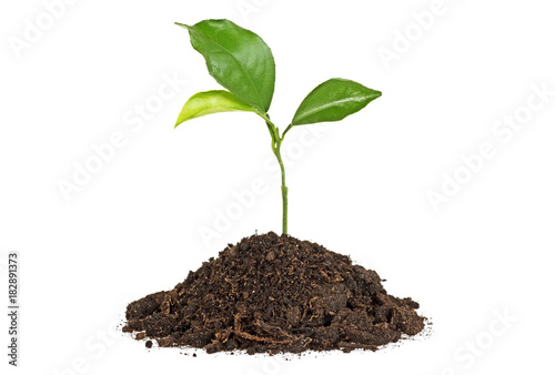 Poster Vegetal Young plant with humus isolated on white background