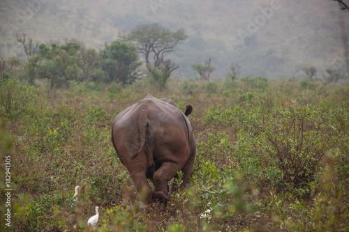 Foto op Canvas Zuid Afrika Breitmaulnashorn