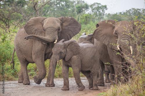 Foto op Plexiglas Afrika Elefant