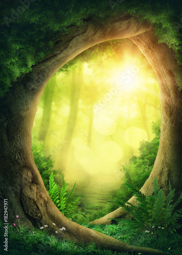 Foto auf Acrylglas Bestsellers Dark magic forest