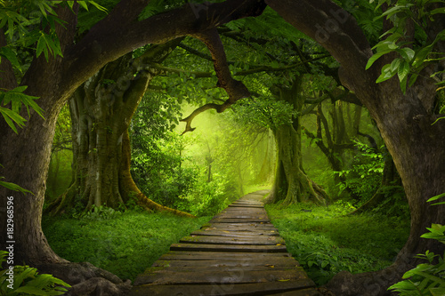 Aluminium Prints Road in forest Asian rainforest jungle
