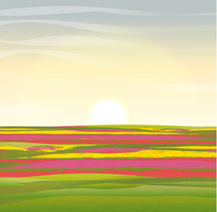 Fototapeta Krajobraz Vector landscape. Holland. Floral fields with tulips of red, yellow and pink flowers.