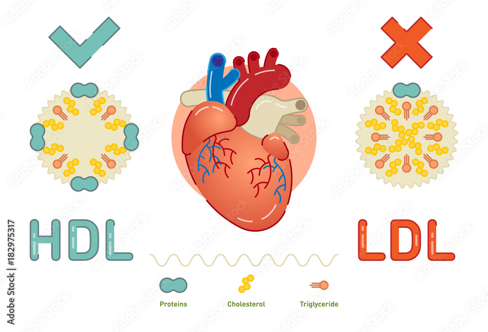 Fototapety, obrazy: What is Lipoprotein - illustrated explanation