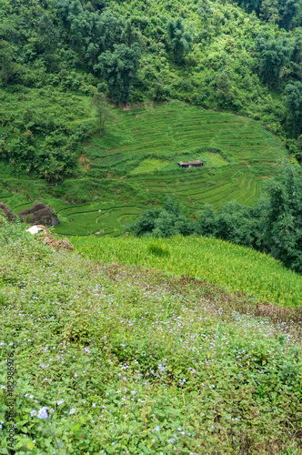 Foto  Rural landscape of rice terraces and farm house