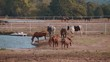 Horses on a farm in Oklahoma - country-style