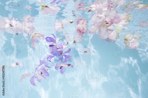 Fotografie, Obraz  プールに浮かぶ花
