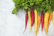 Rainbow Carrots On A Grey Back...