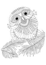 Little Owl Sits On Fir Tree Br...
