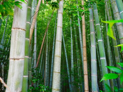 In de dag Bamboo Bambus Hintergrund Wald grün