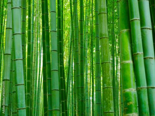 Foto op Aluminium Bamboe Bambus Hintergrund Wald