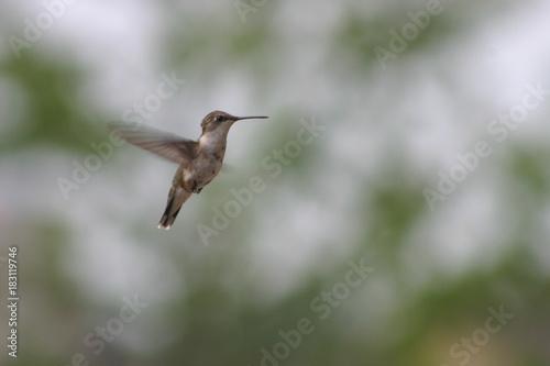 Fotografia  Baby Birds and Birds