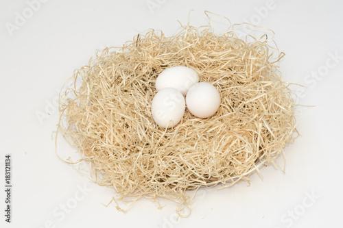 Fotografía  Un nido con tres huevos blancos de gallina