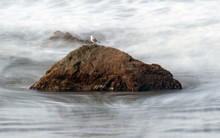 Sea Gull Sitting On A Rock At ...