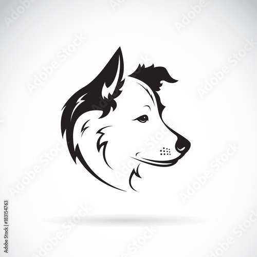 Foto Vector of a border collie dog on white background. Pet. Animal.