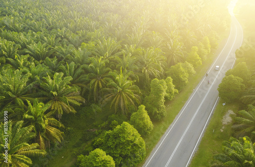 In de dag Luchtfoto Aerial view of Palm Plantation at South East Asia.