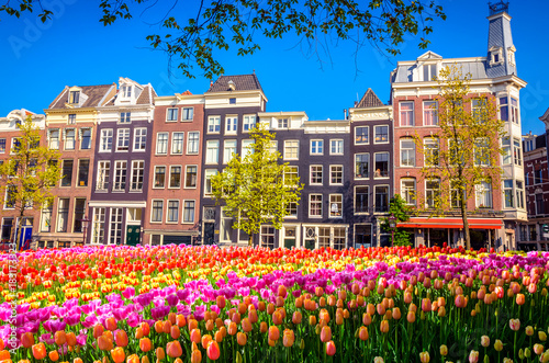 Photo Stands Amsterdam Traditional old buildings and tulips in Amsterdam, Netherlands