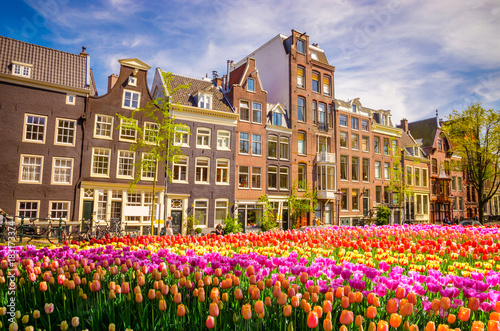 Traditional old buildings and tulips in Amsterdam, Netherlands Canvas Print
