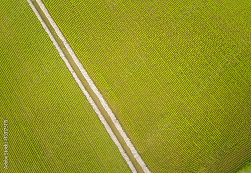 Foto op Plexiglas Luchtfoto Aerial view of green paddy field at south east Asia.