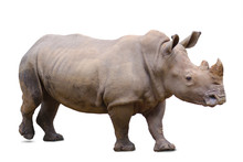 Rhinoceros, Isolated