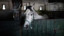 White Horse In The Barn In Pol...