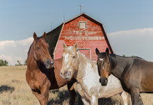 Three Horse In Front Of An Old...