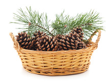 Basket With Cones And A Pine Tree.