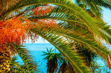 Fototapetabeautiful spreading palm tree on the beach, exotic plants symbol of holidays, hot day, big leaves