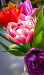 Panel Szklany Tulipany Tulpe in Pink