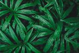 Rain drop on tropical green leaf textures, dark tone nature background