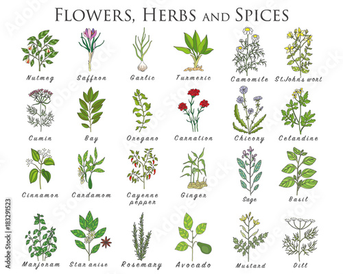Set of spices, herbs and officinale plants icons. Healing plants. Wall mural