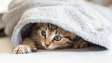 Kleines Katzen Baby Spielt Mit...