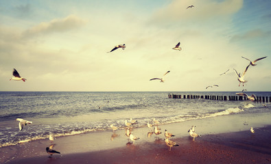 FototapetaVintage stylized picture of birds at a beach