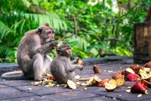Family Of Monkeys Eating Fruit...
