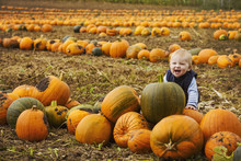 A Small Boy Sitting Among Rows Of Bright Yellow, Green And Orange Pumpkins In A Field, Laughing.